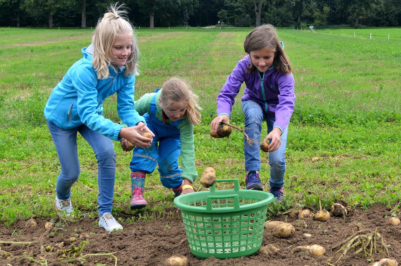 bilder-0709-36kartoffelfest-niethammer