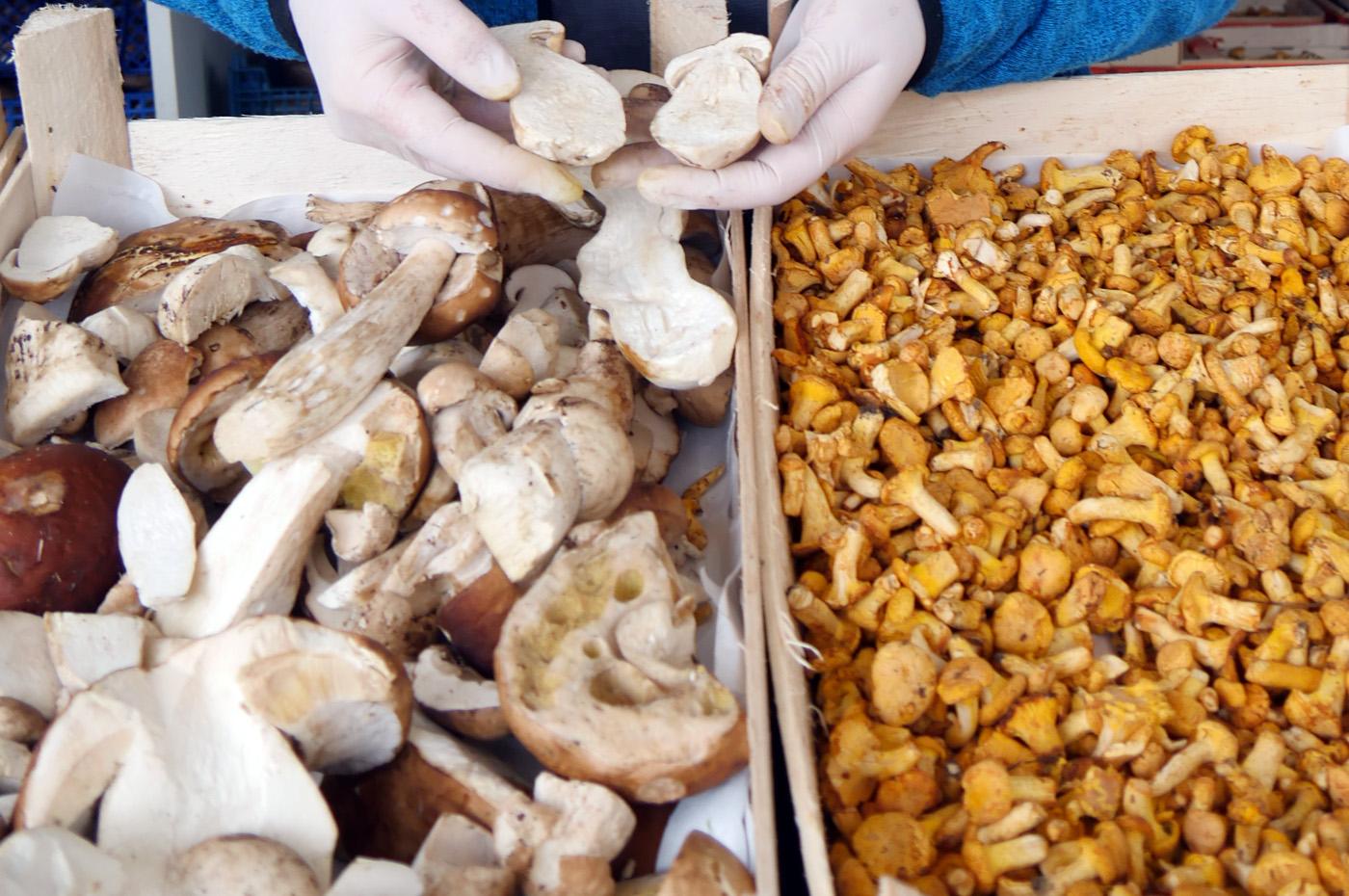 bilder_Kartoffelfest2017_Foto BräuningerP1010191